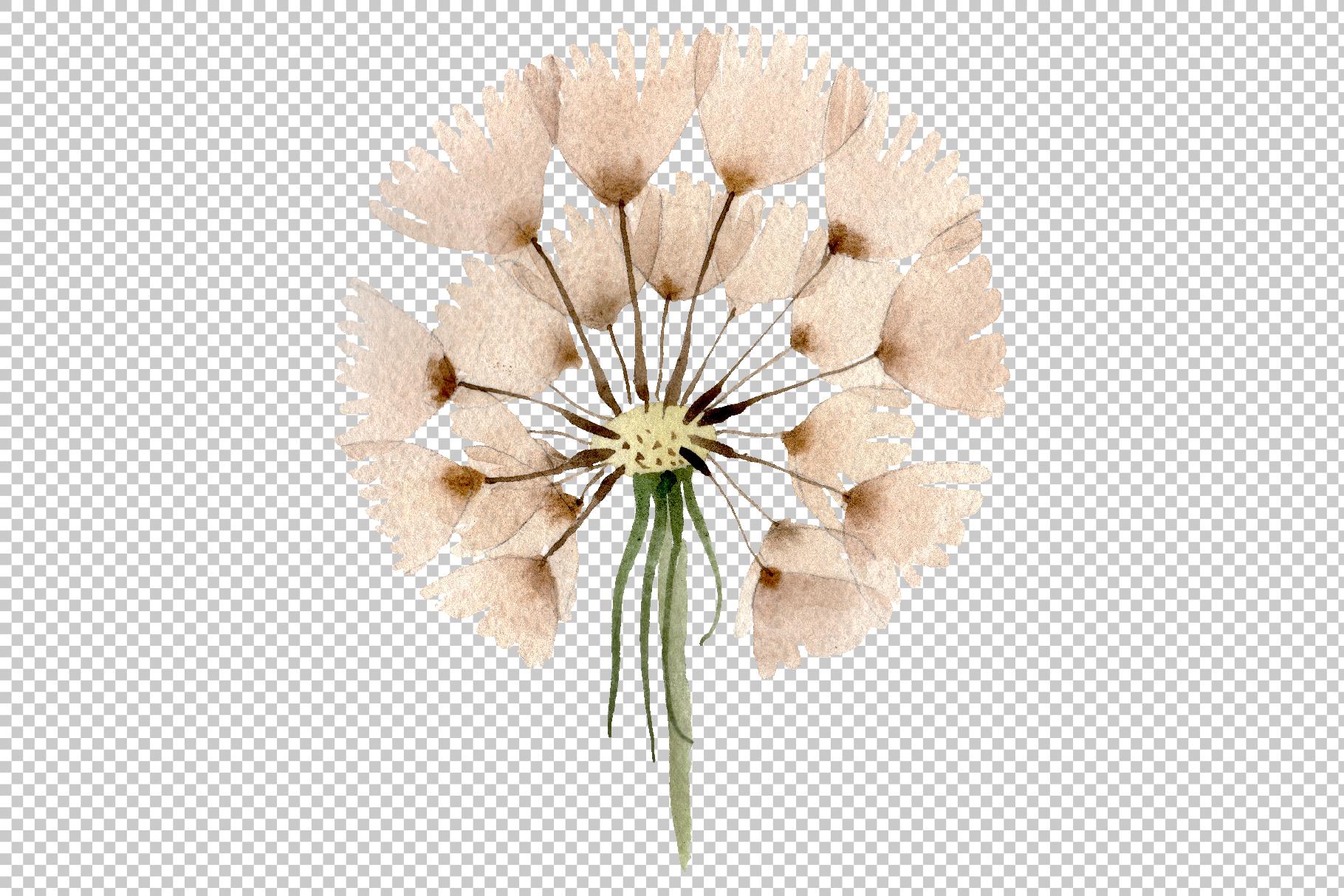 Dandelion Watercolor png example image 6