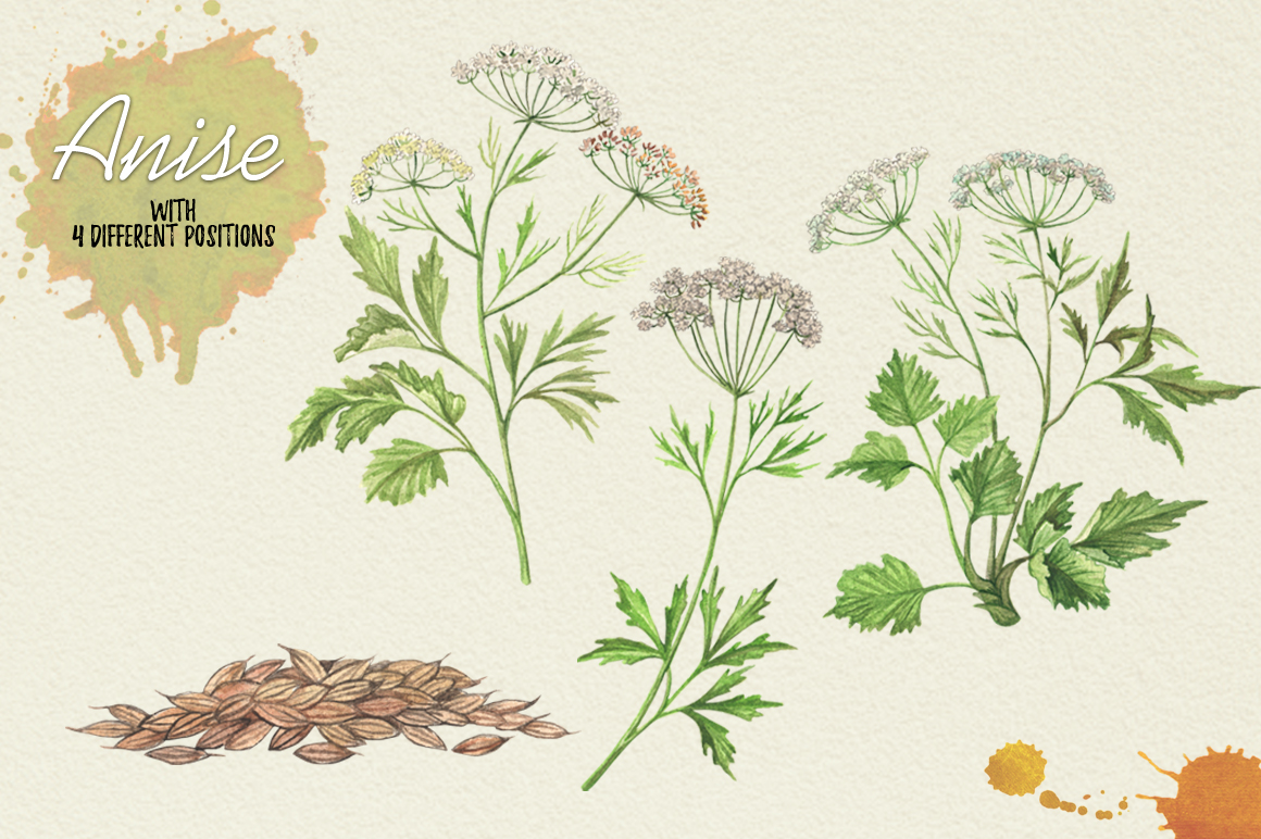 North American Herbs example image 2