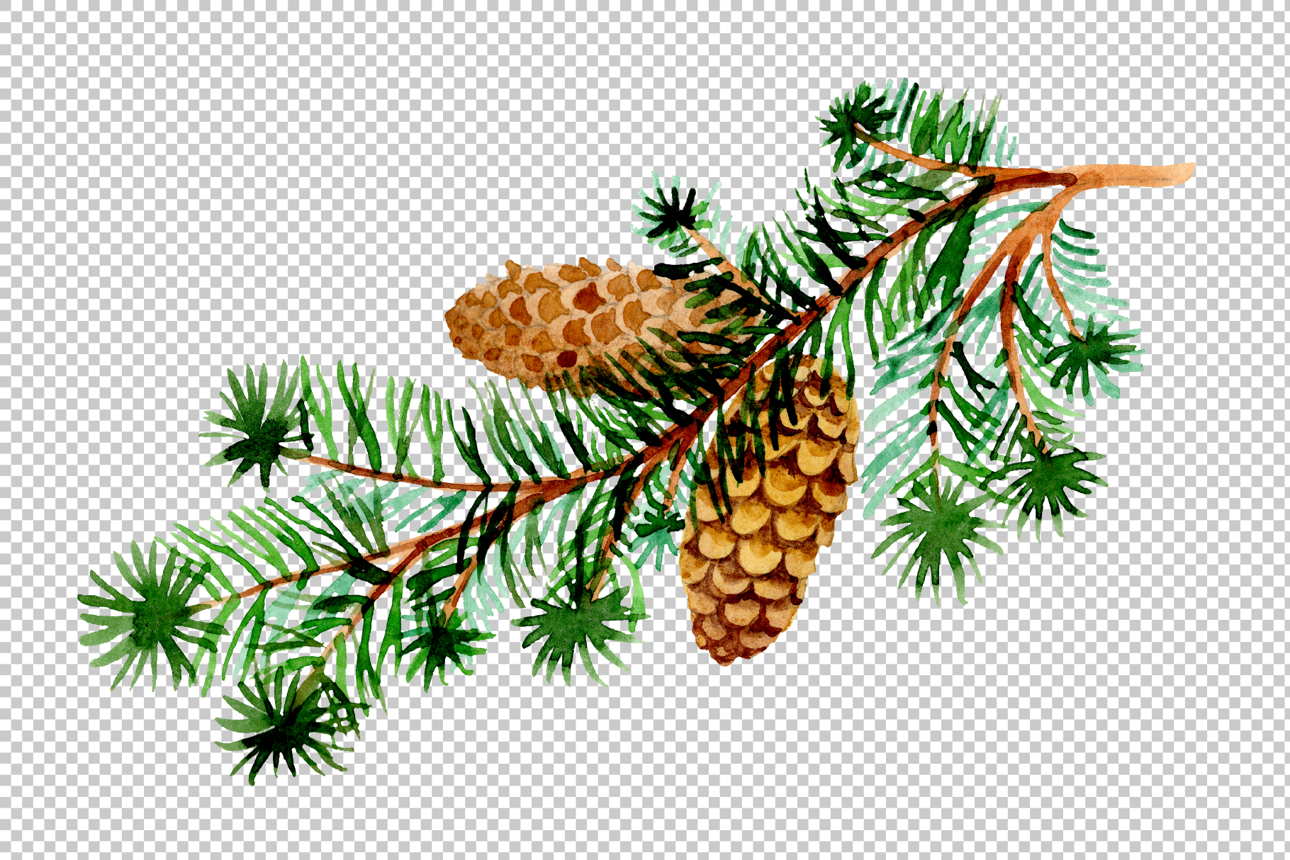 Branches of spruce and pine png watercolor set example image 3