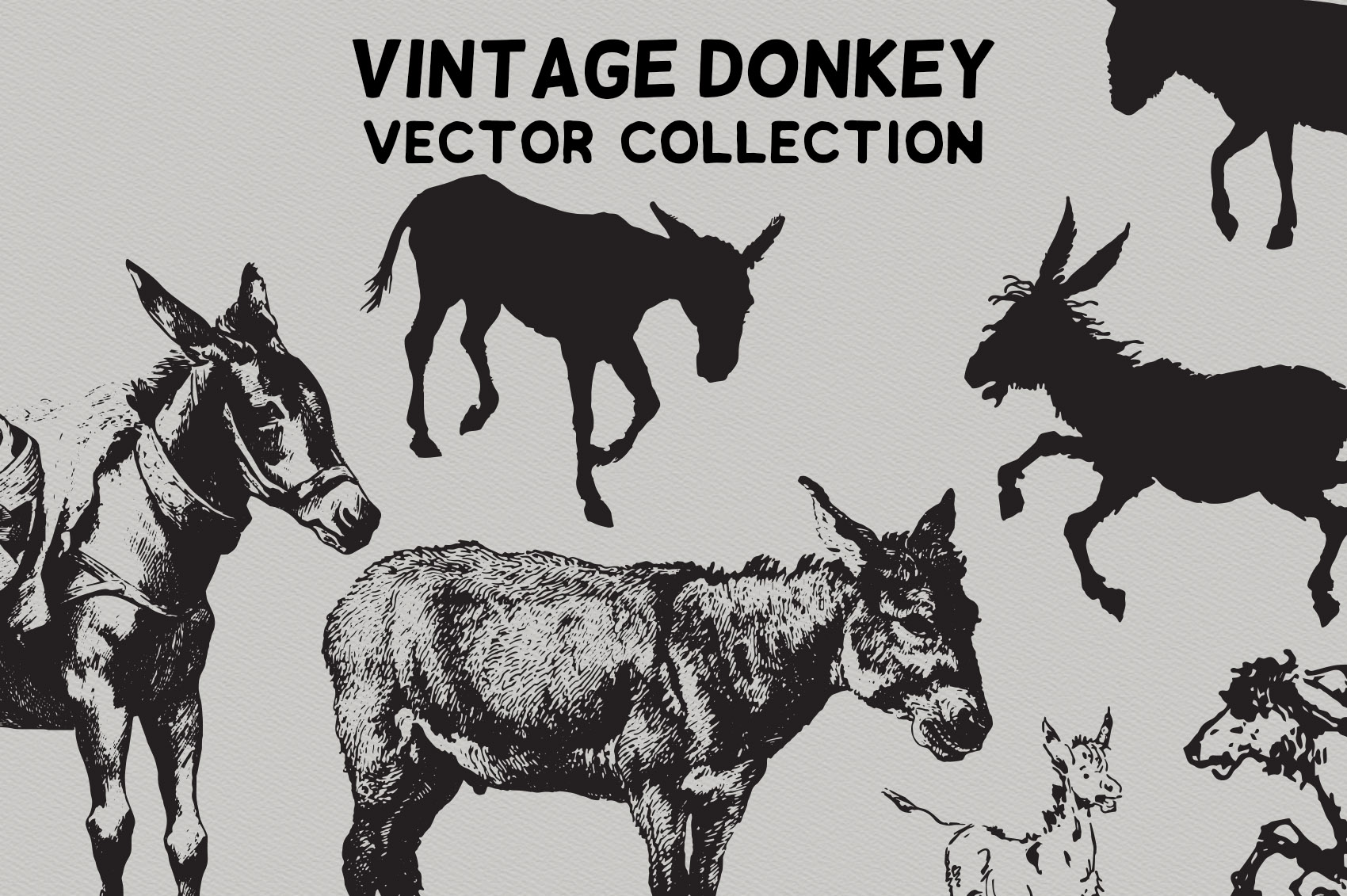 Vintage Donkeys Vector Collection example image 4