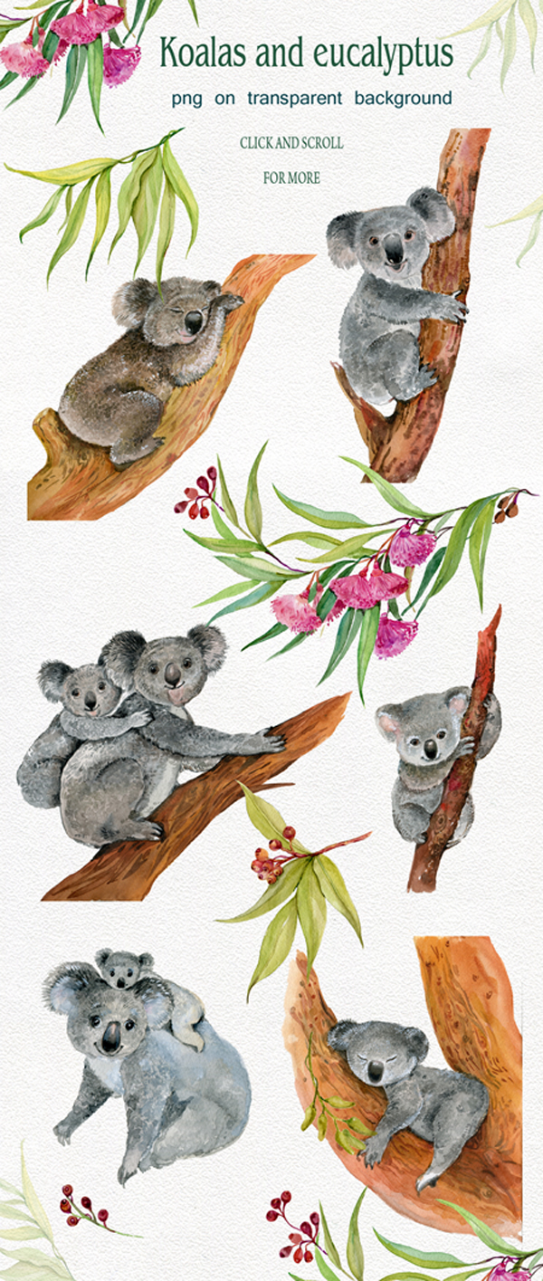 Koala & eucalyptus set illustration example image 2