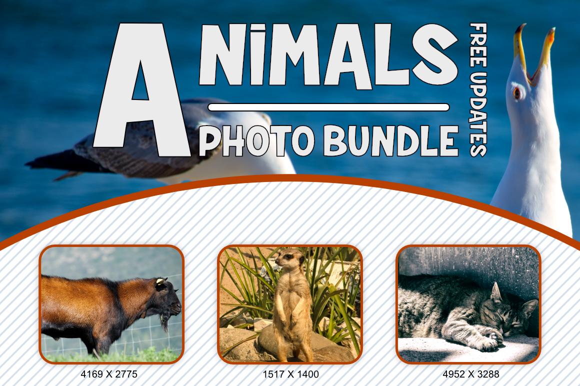 Animals Photo Bundle example image 4