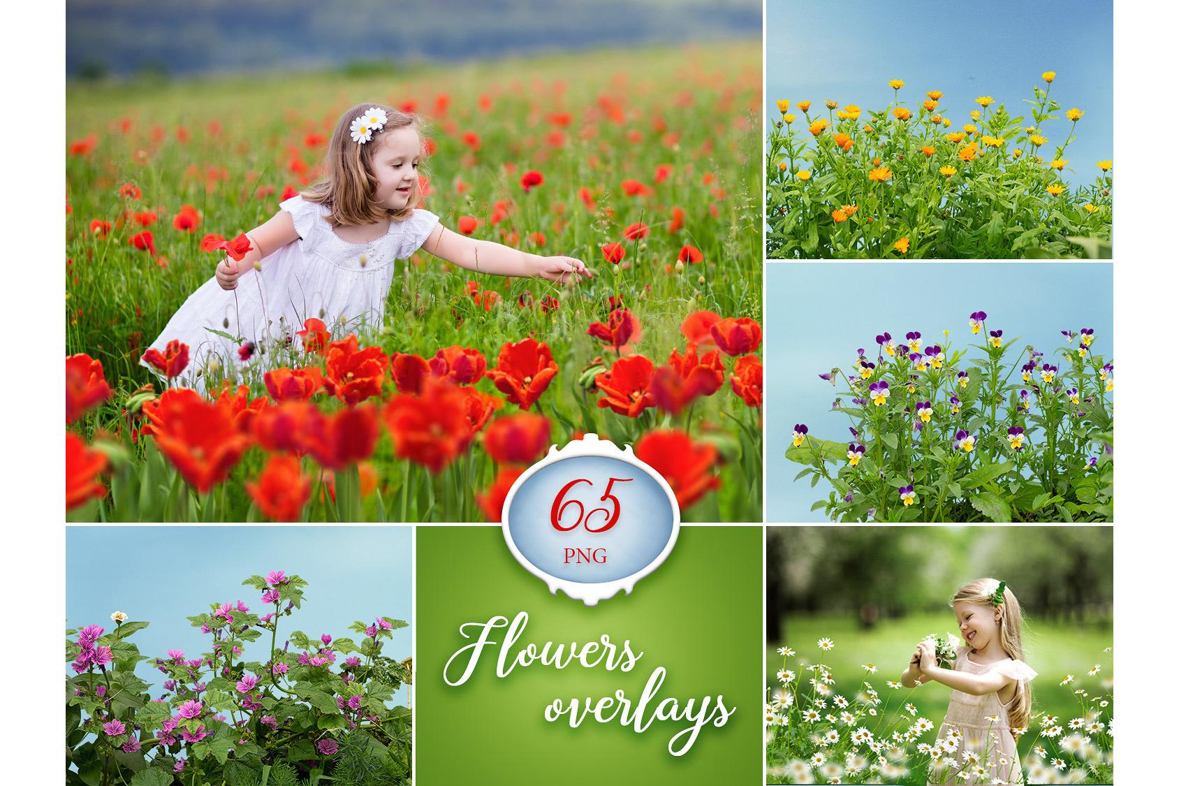 65 Flower Photo Overlays example image 1