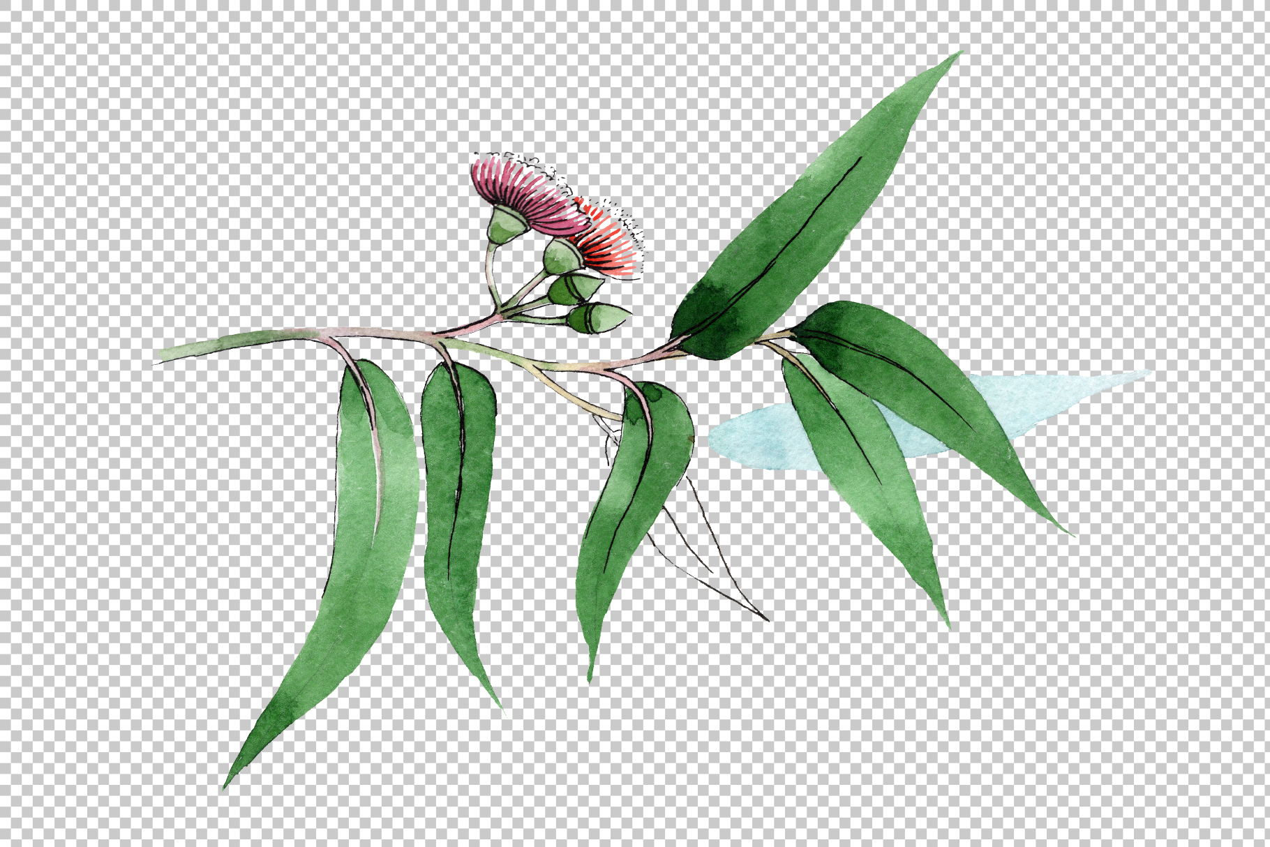 Eucalyptus branch PNG watercolor set example image 2