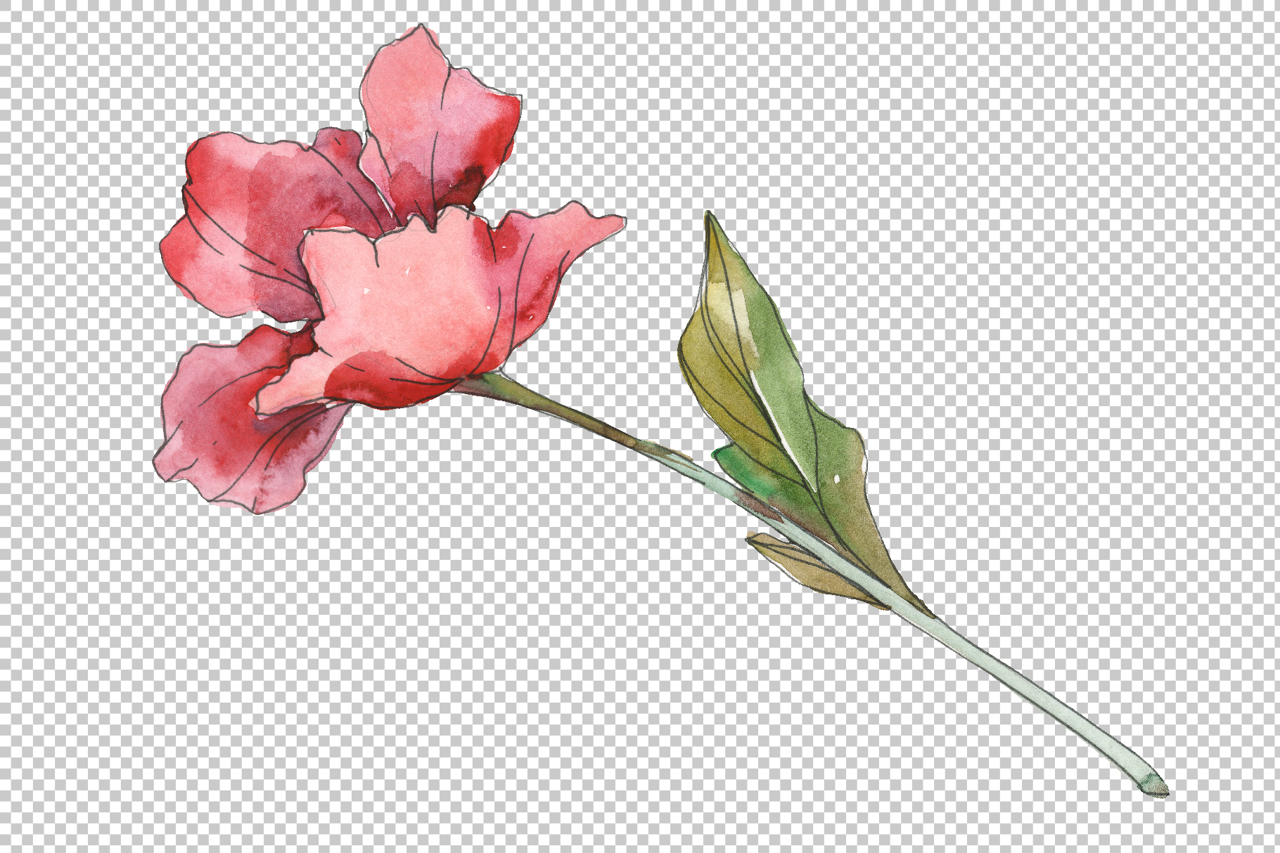 Poppy Watercolor png example image 5