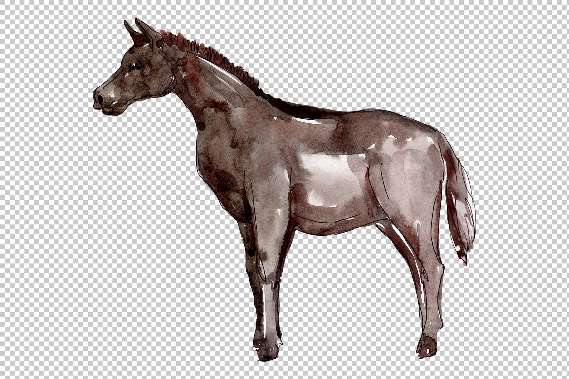 Farm animals Horse, foal Watercolor png example image 3