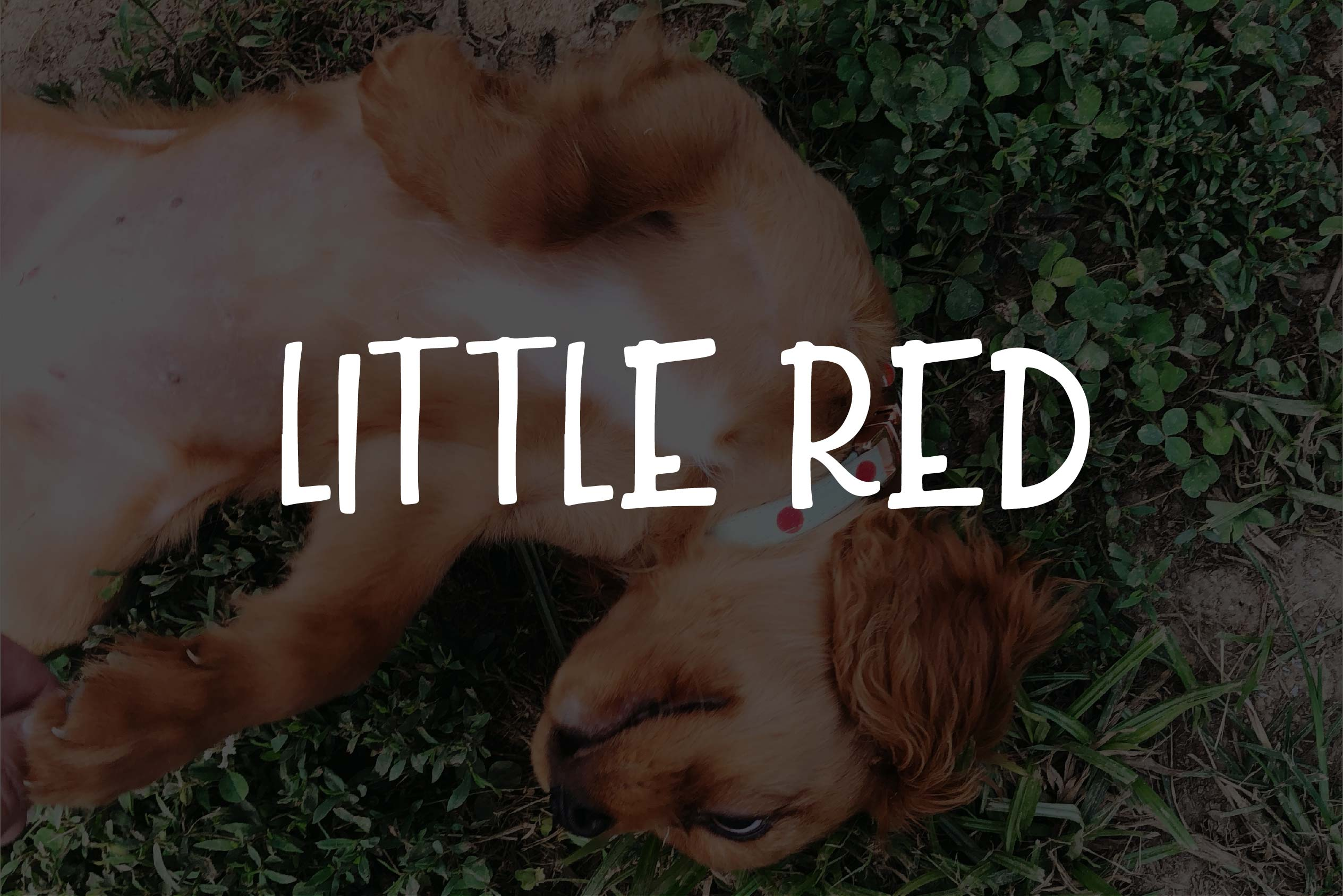 Little Red example image 1