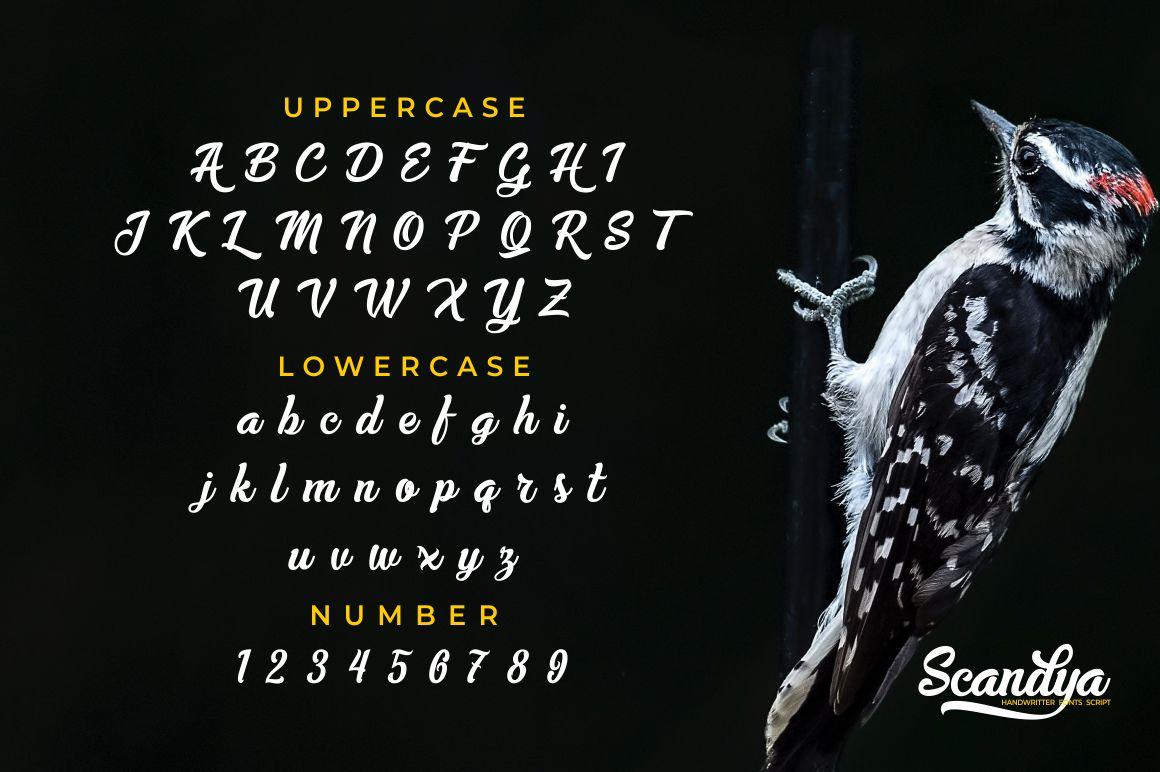 Scandya Script example image 8