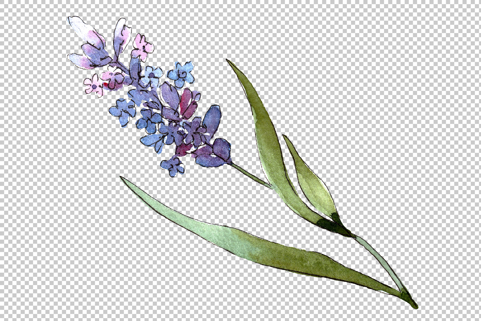 Bouquet of idyll lavender Watercolor png example image 5
