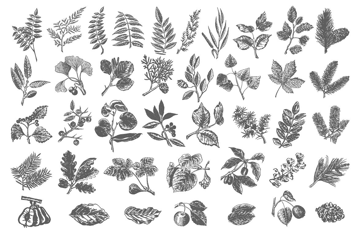 40 handsketched floral elements example image 2