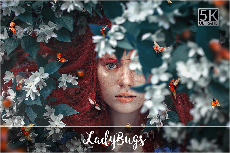 5K Ladybugs Overlays example image 1