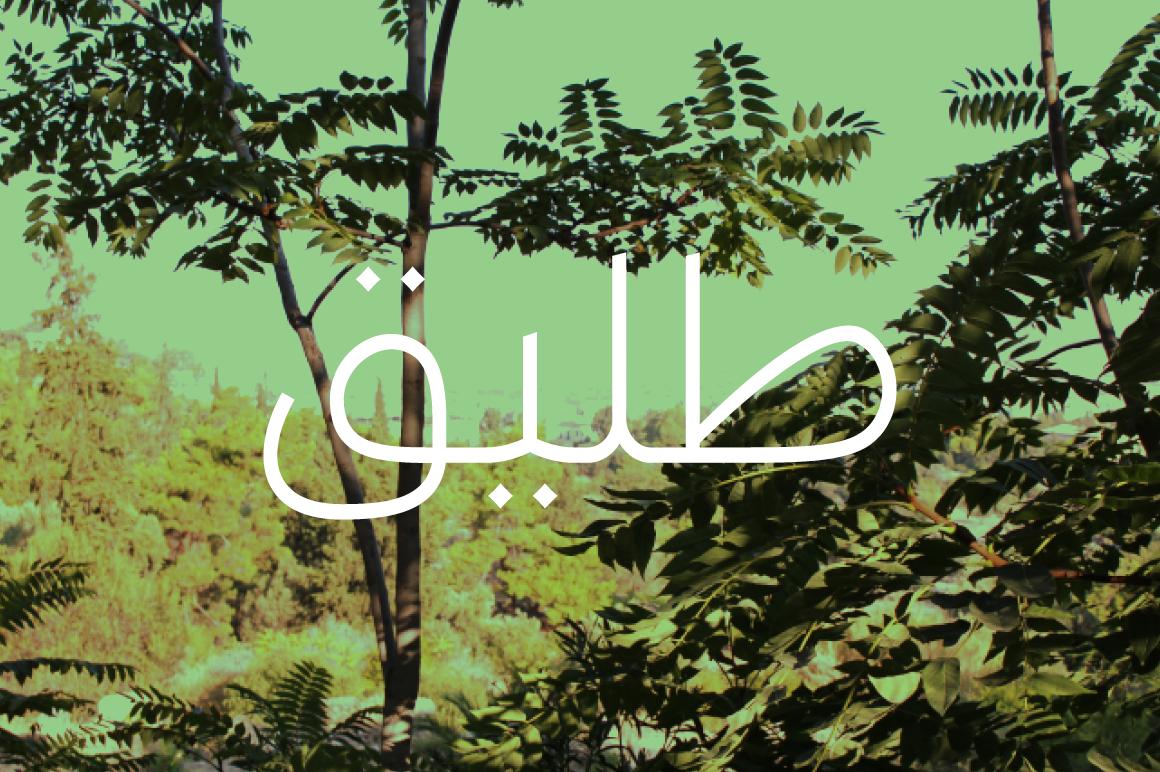 Taleeq - Arabic Typeface example image 1