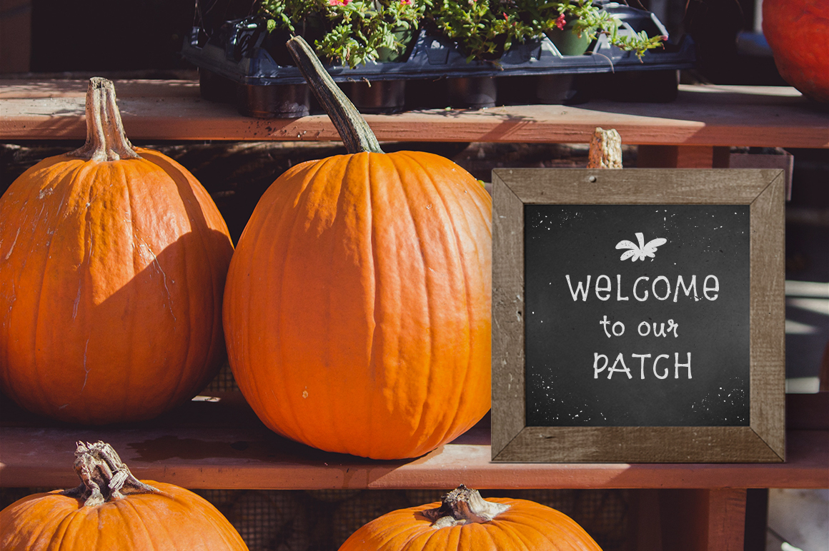 8$ Pumpkin Farm Font example image 8
