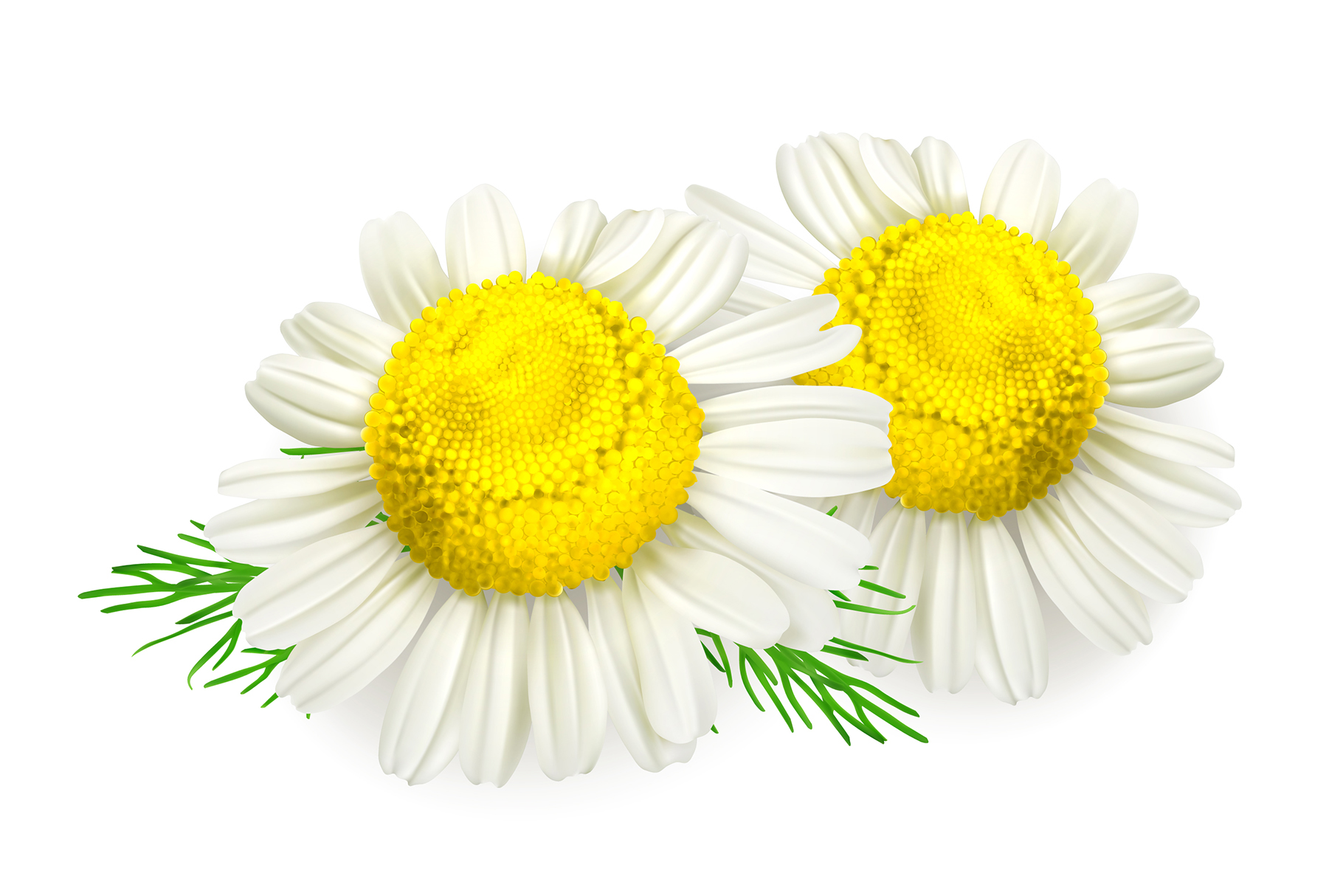 Skincare cosmetics. Lavender, chamomile, mint, almond, olive example image 2
