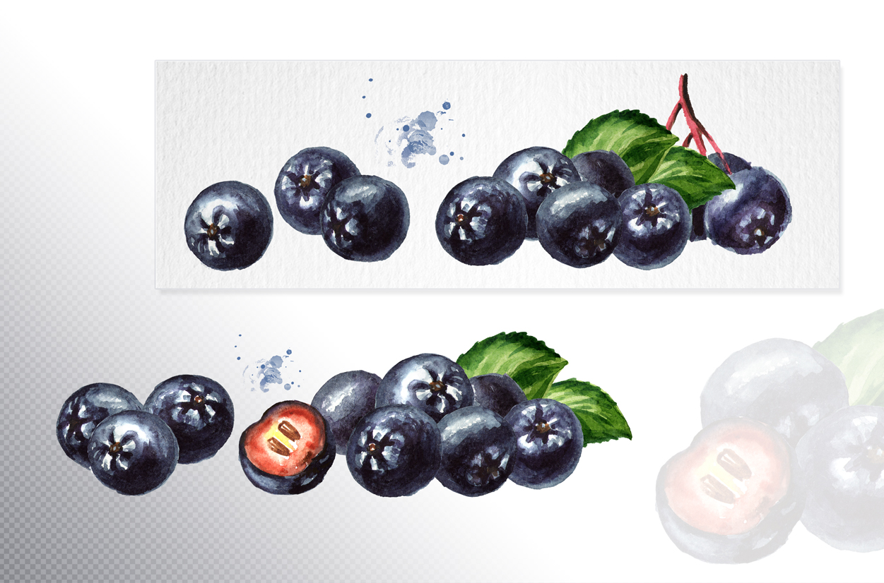 Aronia. Watercolor collection example image 4