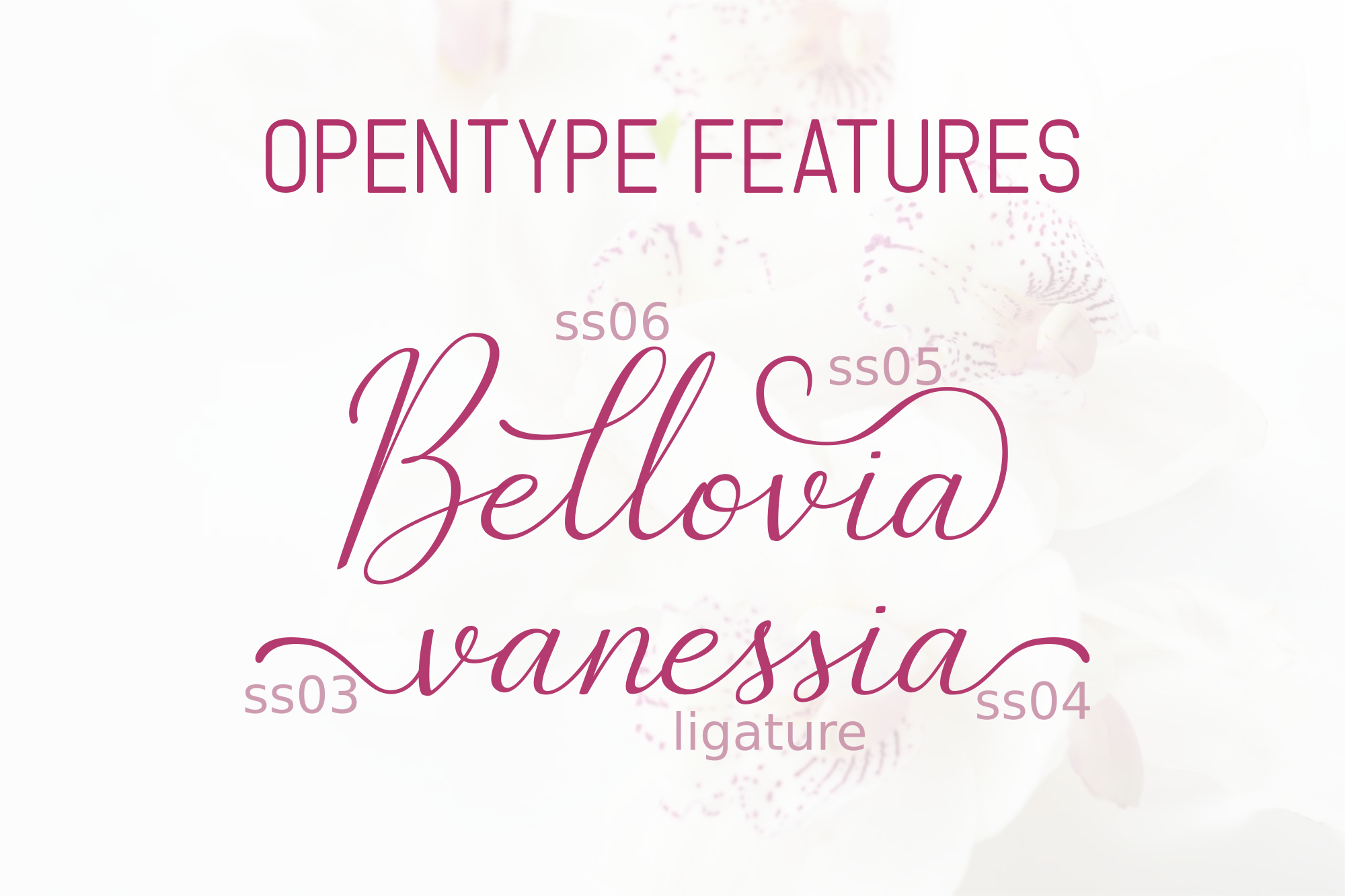 The Bellovia Font Duo example image 2
