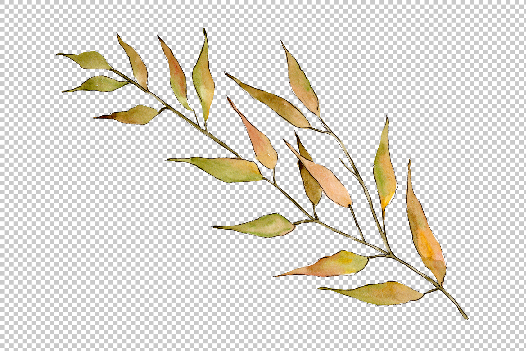 Willow branches PNG watercolor set example image 2