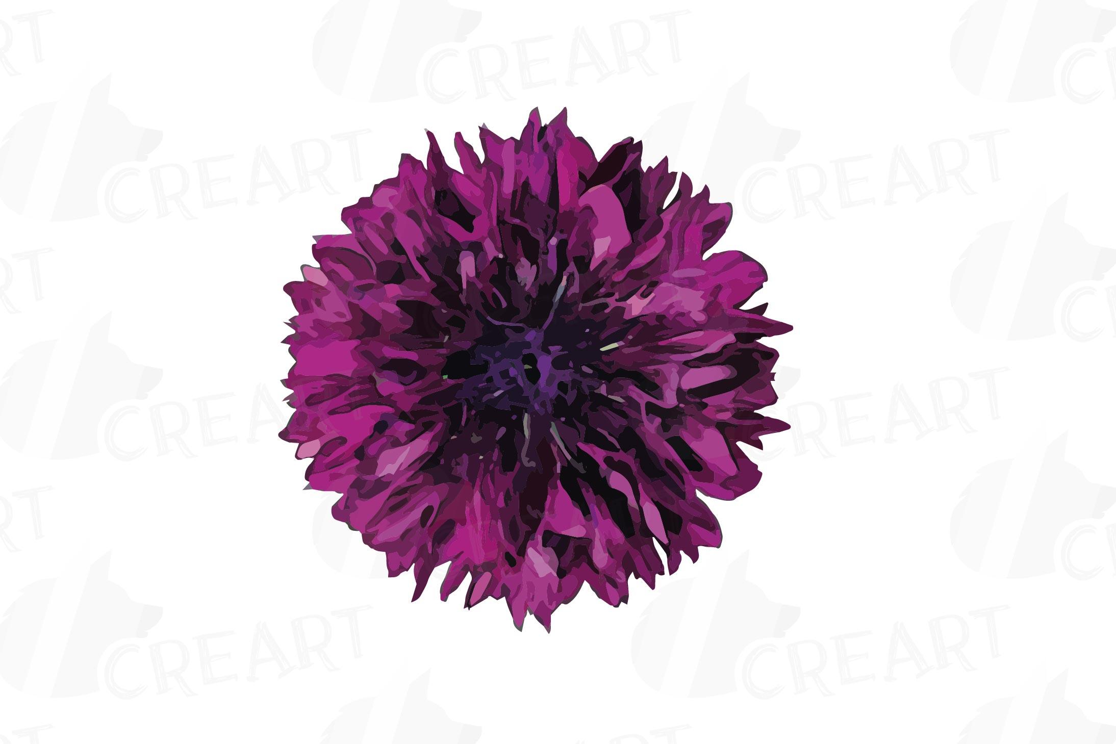 Cornflower watercolor clip art pack, bachelor's button example image 17