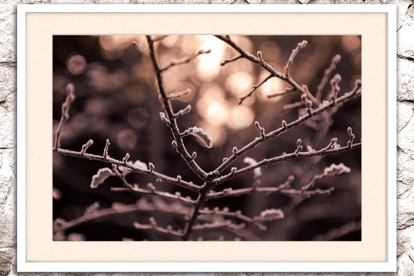 Nature photo, flora photo, twig photo, winter photo example image 2
