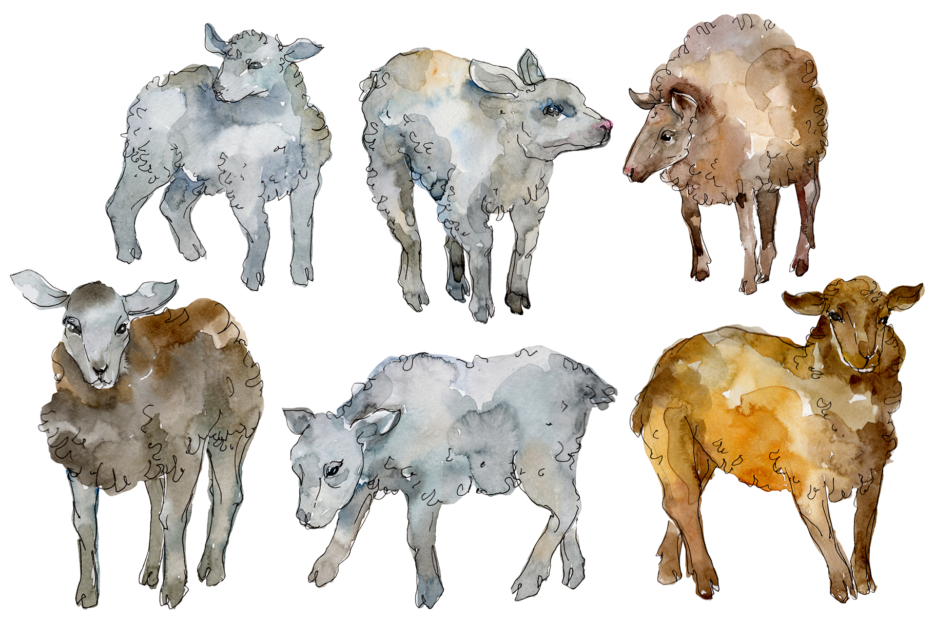 Farm animals lamb Watercolor png example image 1