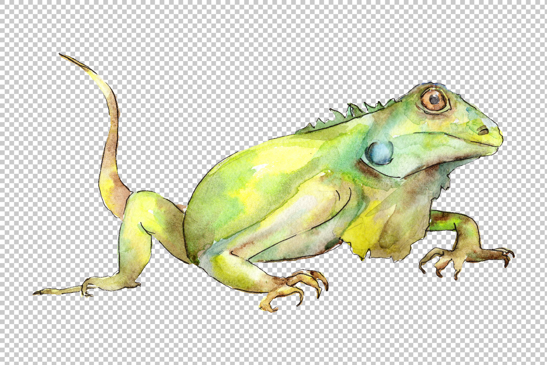 4 iguanas Watercolor png example image 3