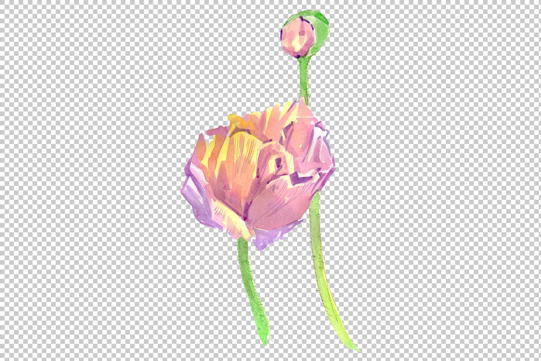 Original poppy Watercolor png example image 3