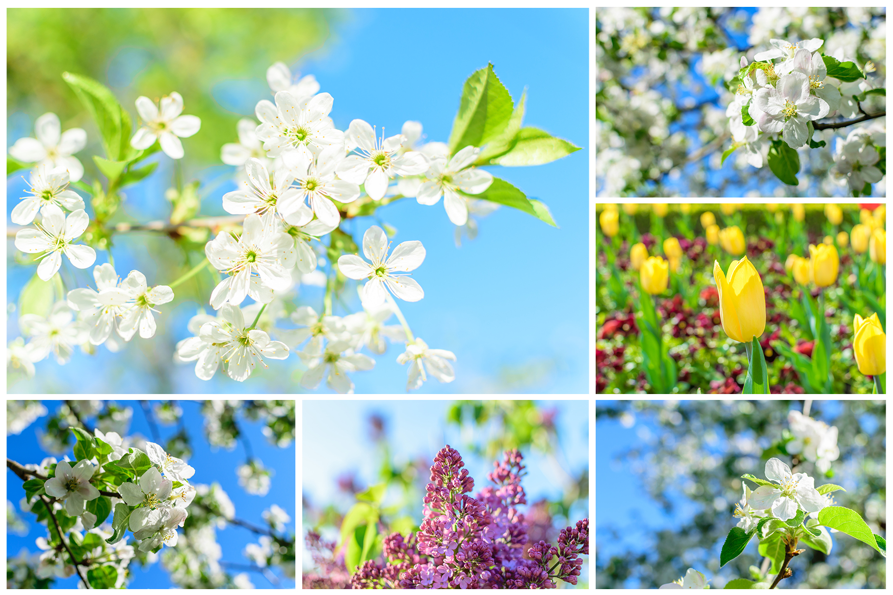 Spring Flowers and Paintings Bundle example image 9