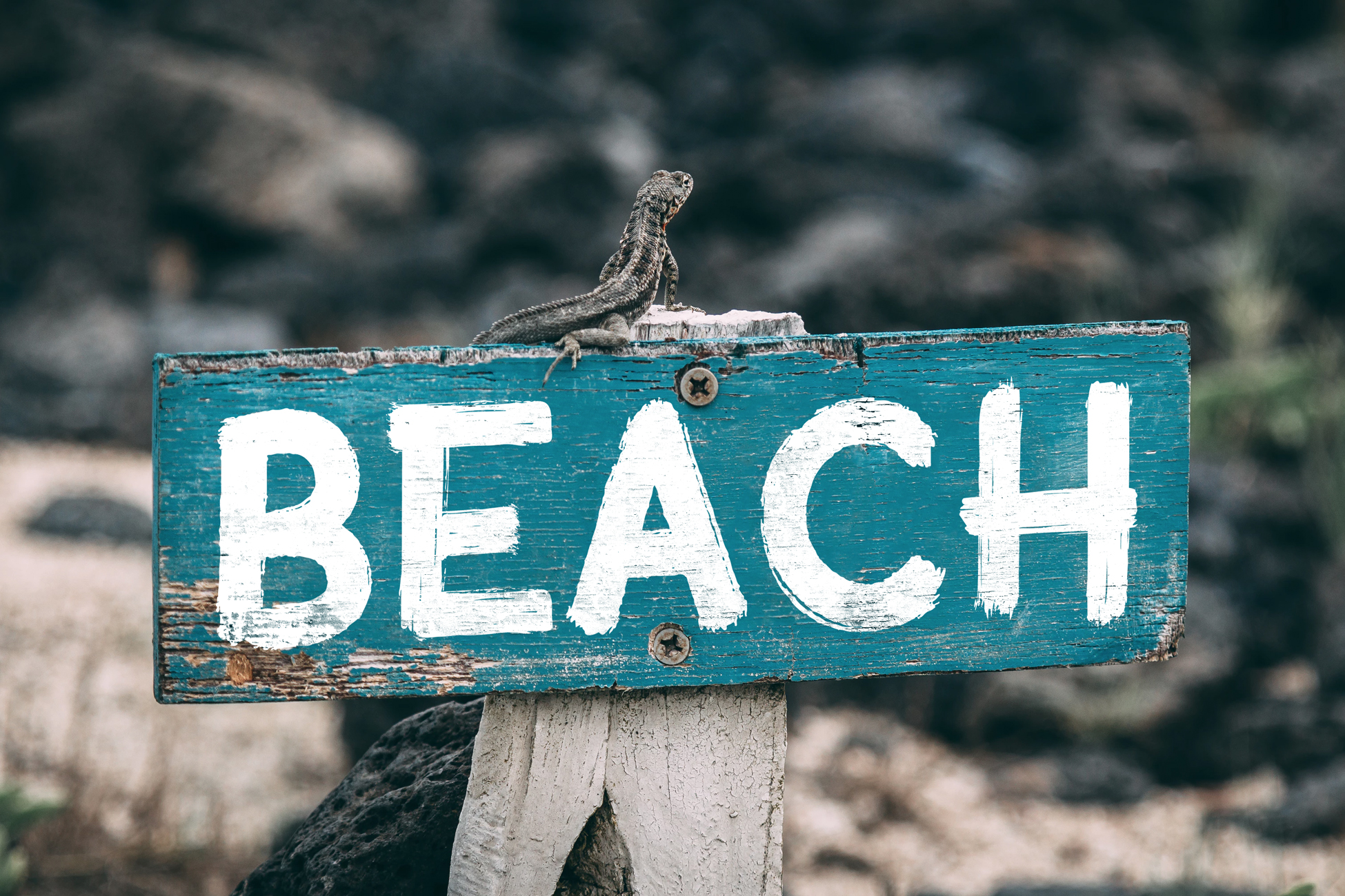 Sublime Beach Brush Font example image 4