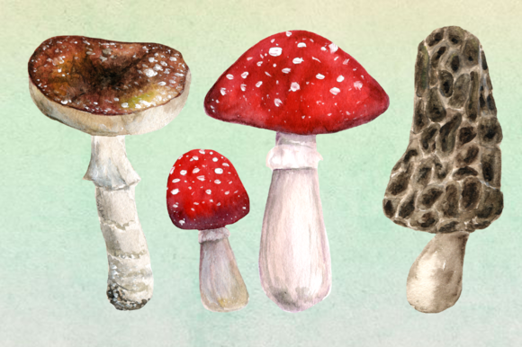 10 Watercolor Mushroom Set + 3 Bonus example image 2