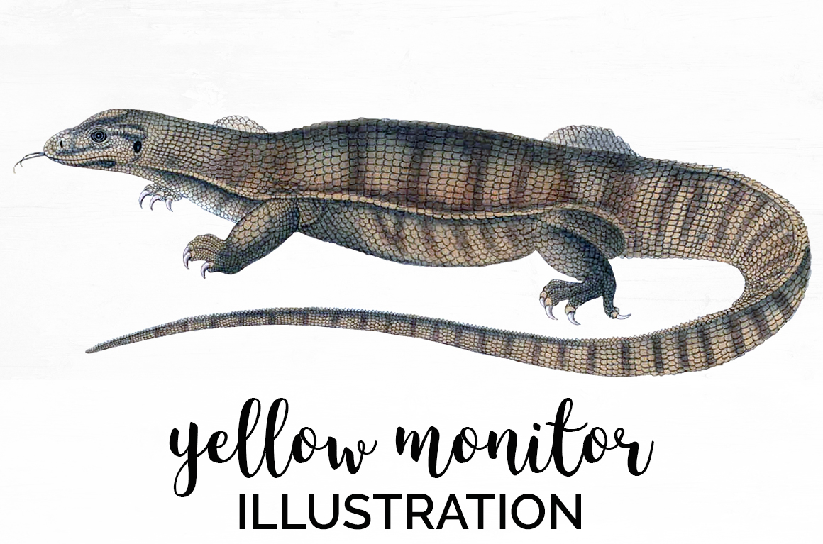 Reptile - Vintage Yellow Monitor example image 1