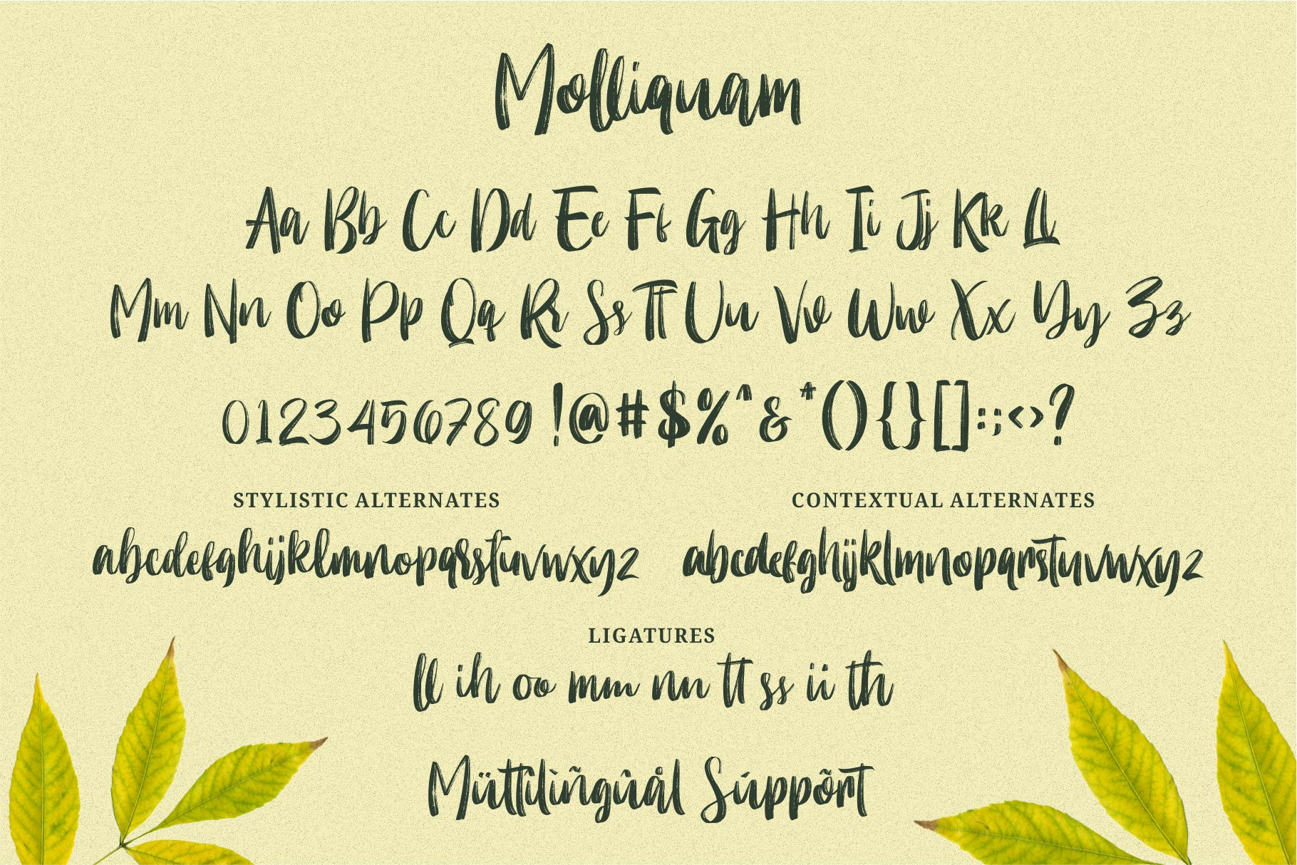 Molliquam example image 6