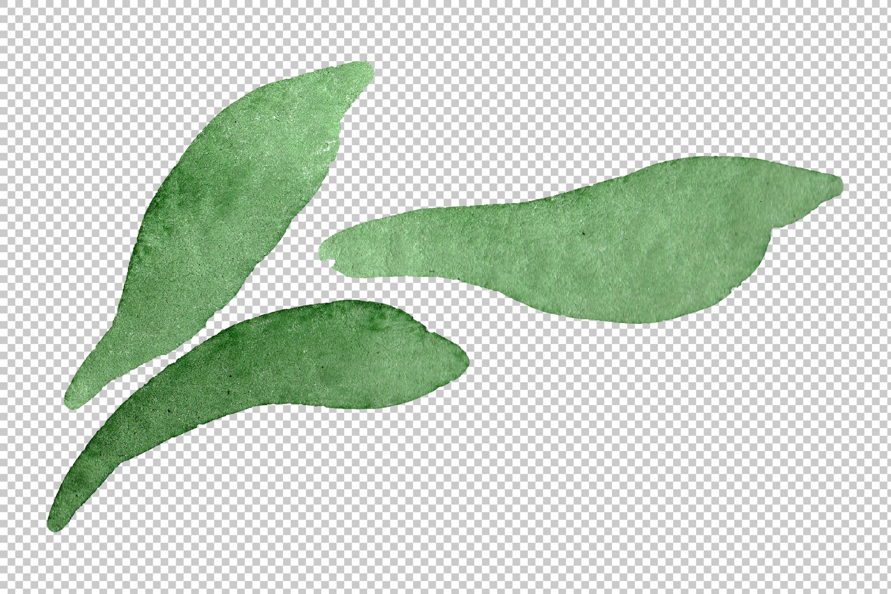 Asters Watercolor png example image 2