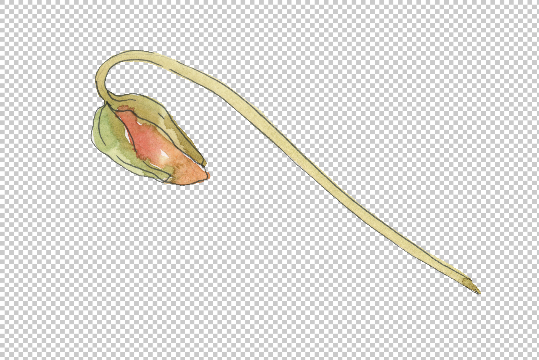 Poppy red Watercolor png example image 5