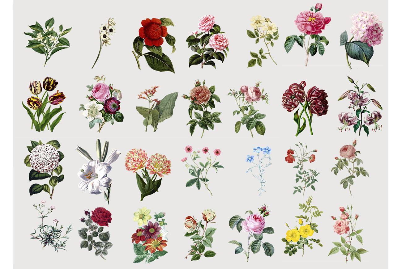Botanicum - V.2|Elements Botanic example image 4