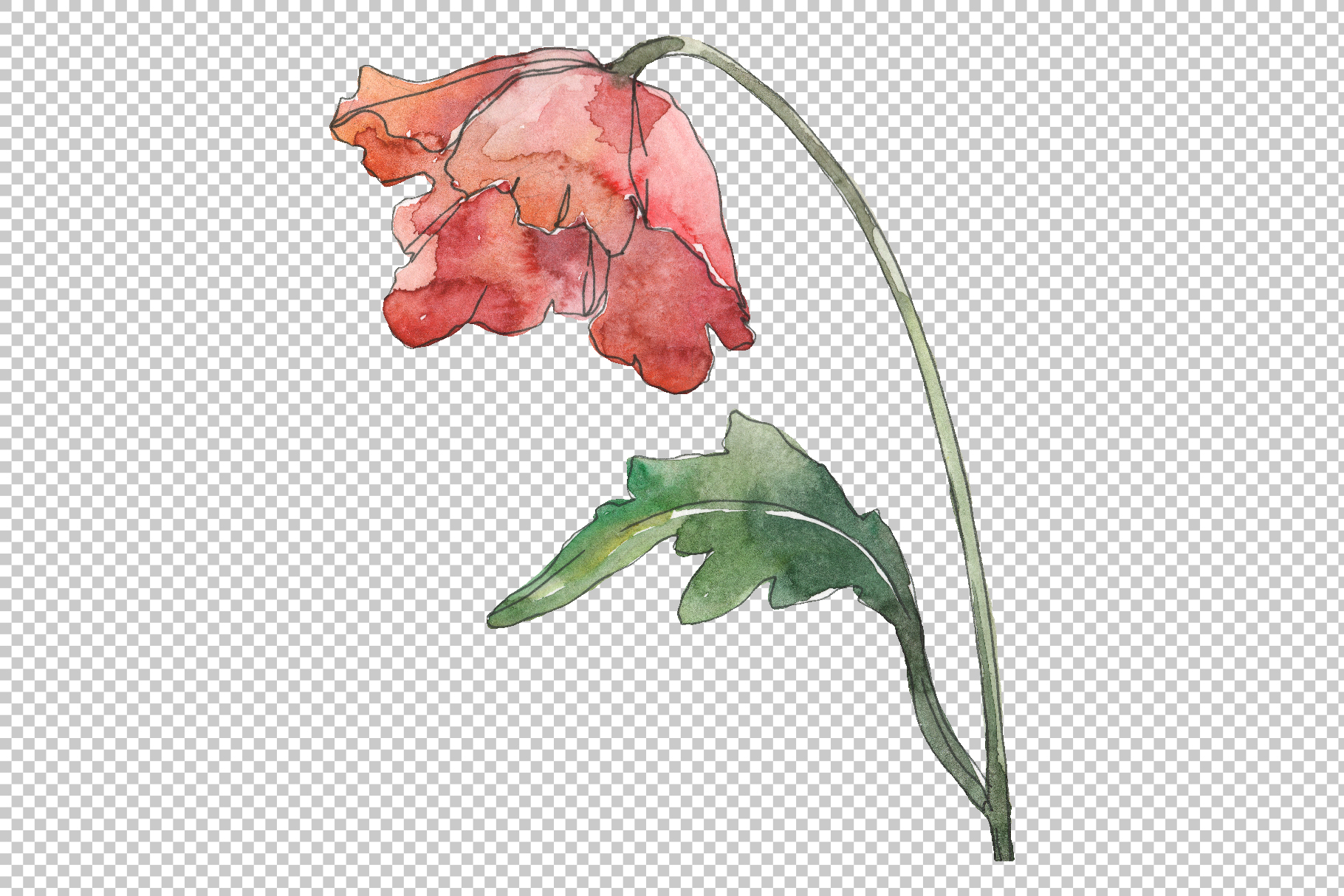 Poppy Watercolor png example image 4