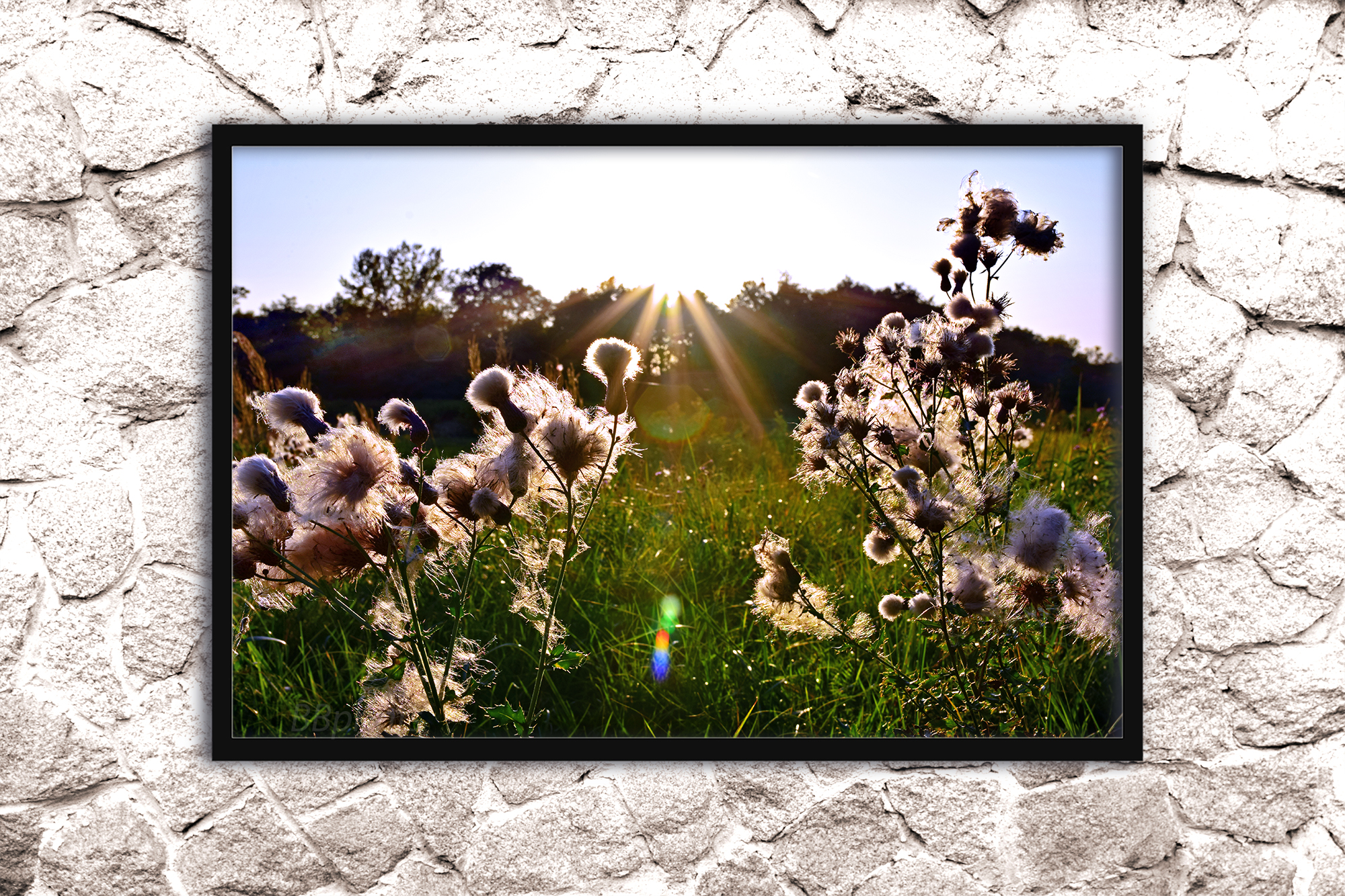 Nature photo, landscape photo, floral photo, fluffy grass example image 2