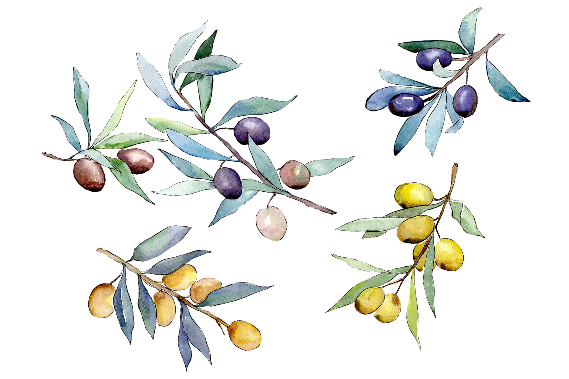 Watercolor olives PNG set example image 1