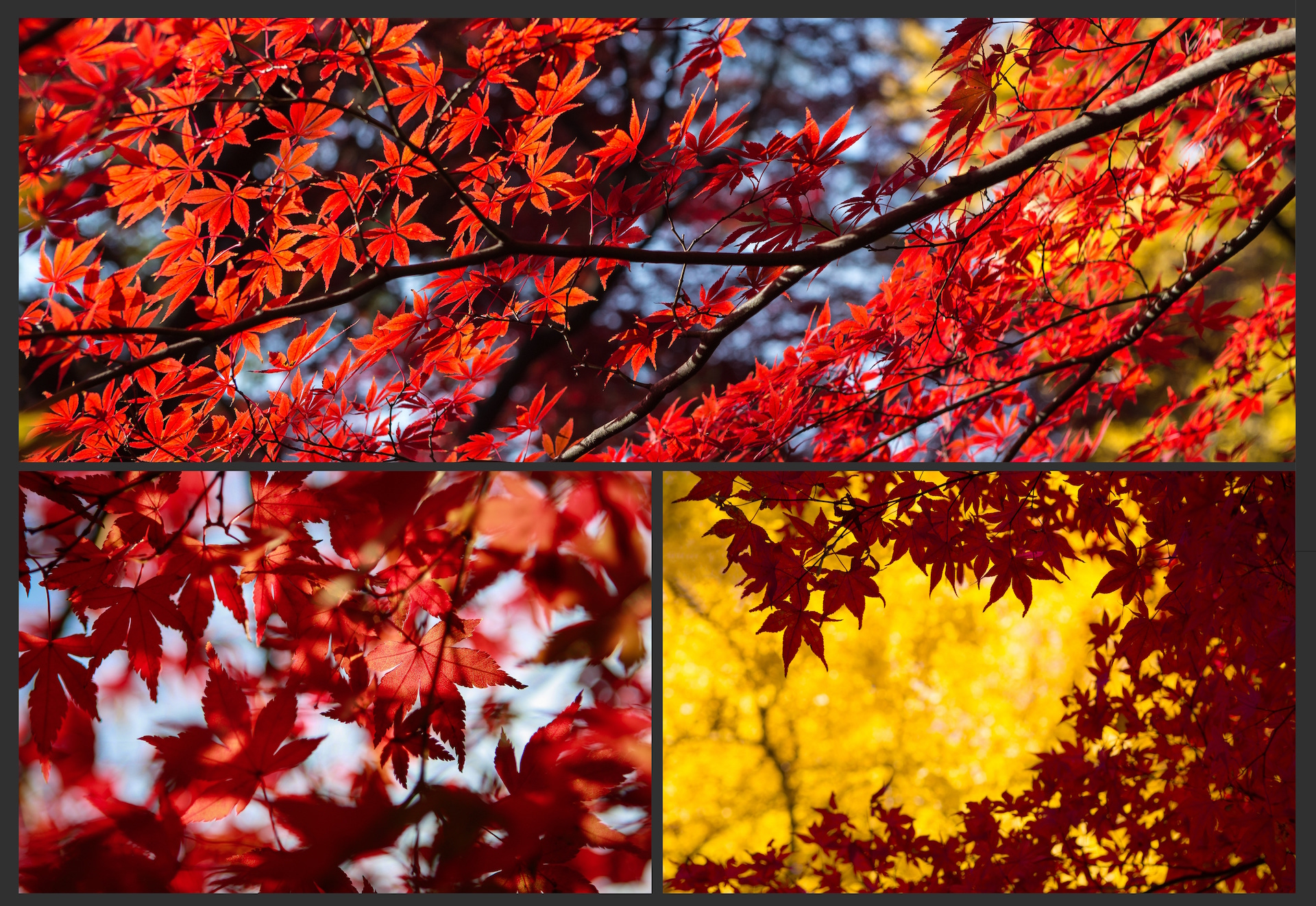 The AUTUMN LEAVES Pack example image 7