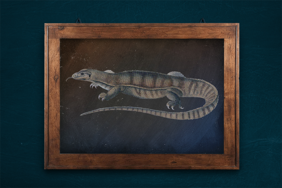 Reptile - Vintage Yellow Monitor example image 2