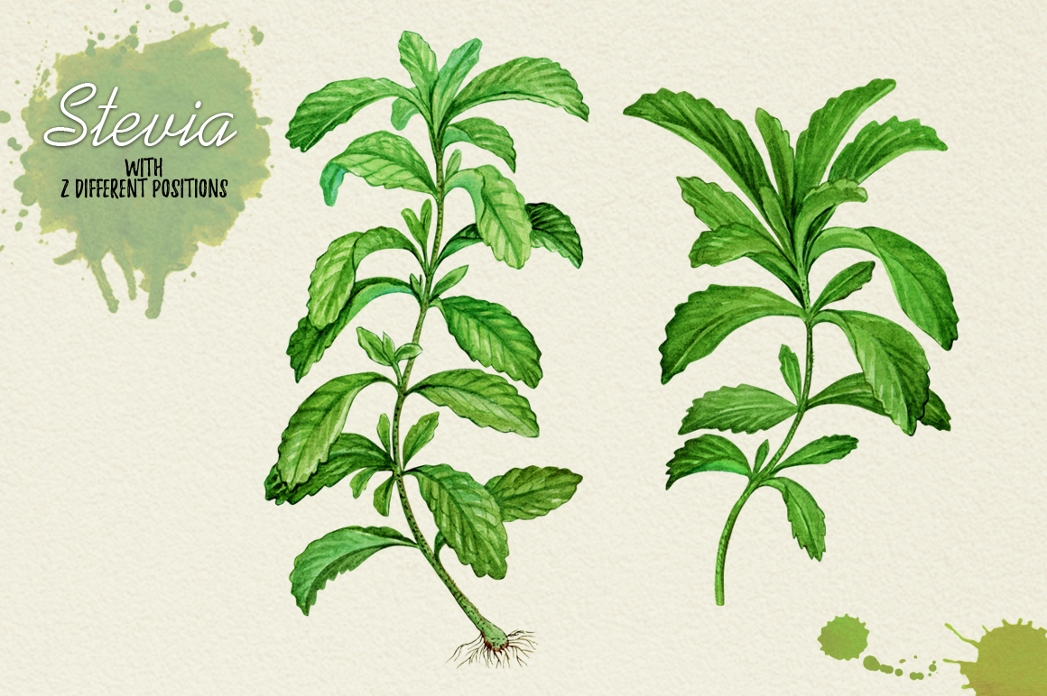North American Herbs example image 13