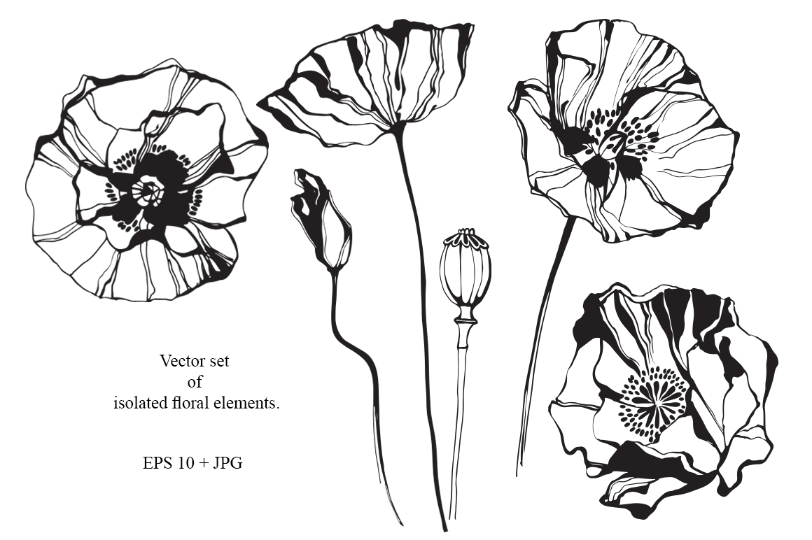 Poppy. Vector collection. example image 4
