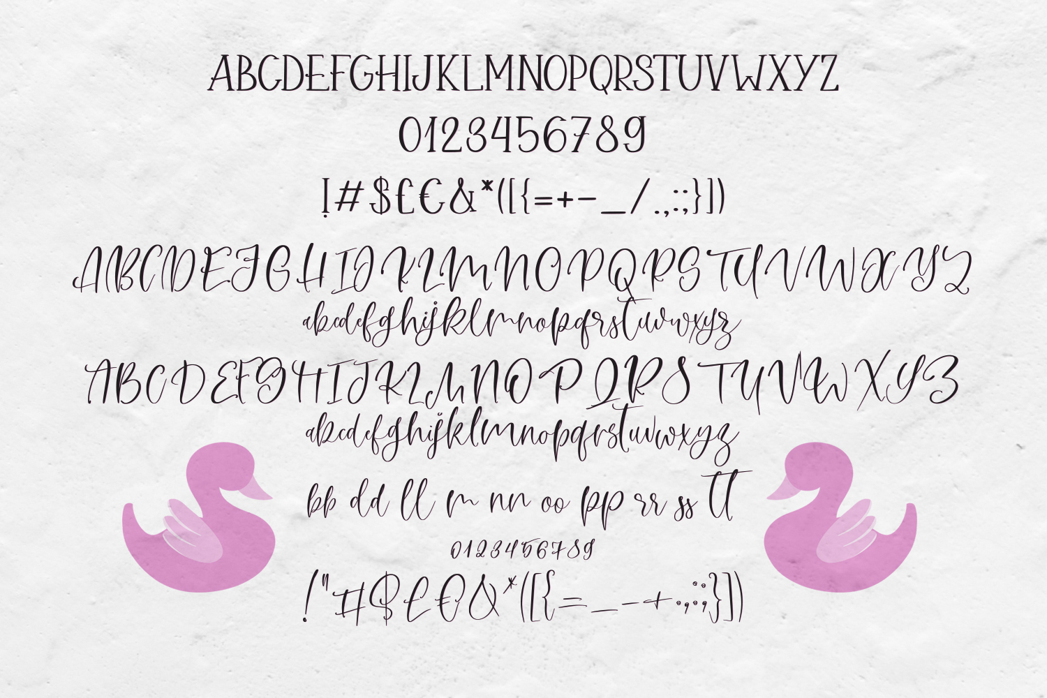 Pink Swan Font Duo example image 6