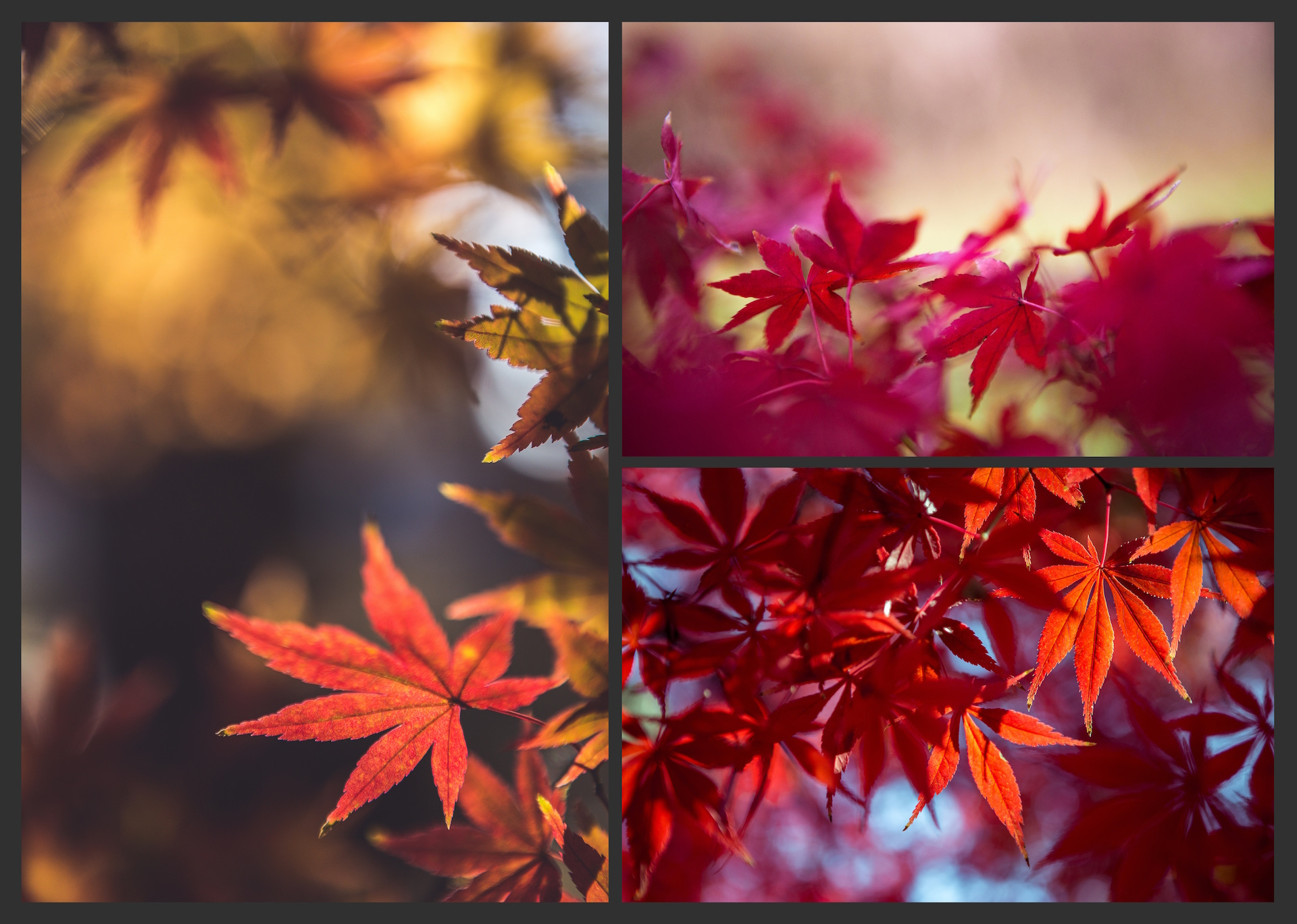 The AUTUMN LEAVES Pack example image 5