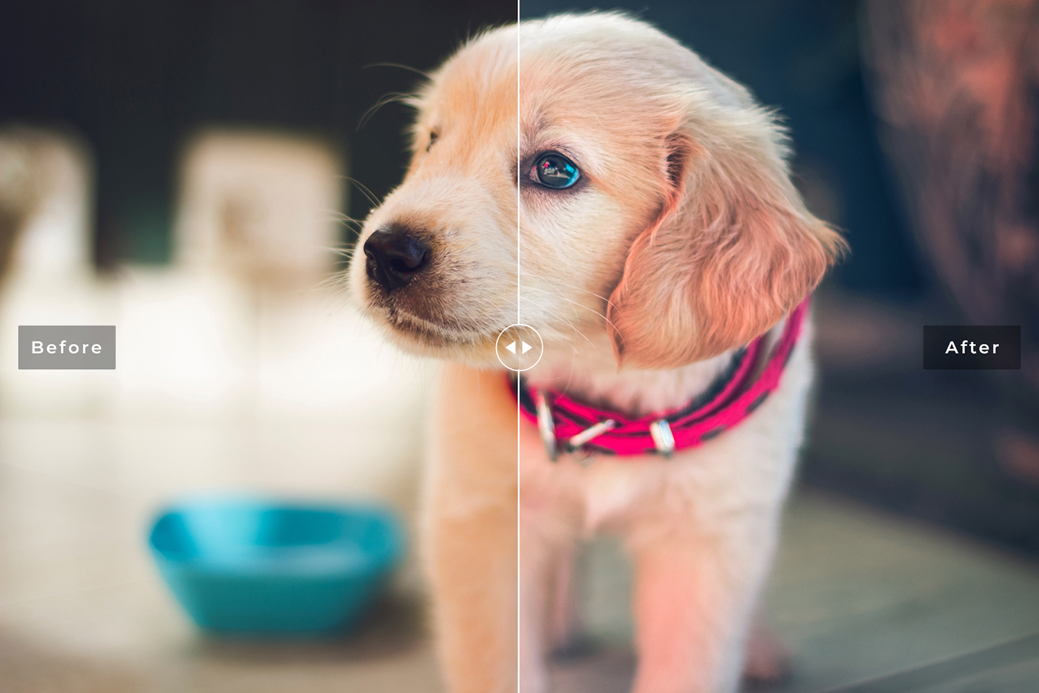 My Dog Mobile and Desktop Lightroom Presets example image 5