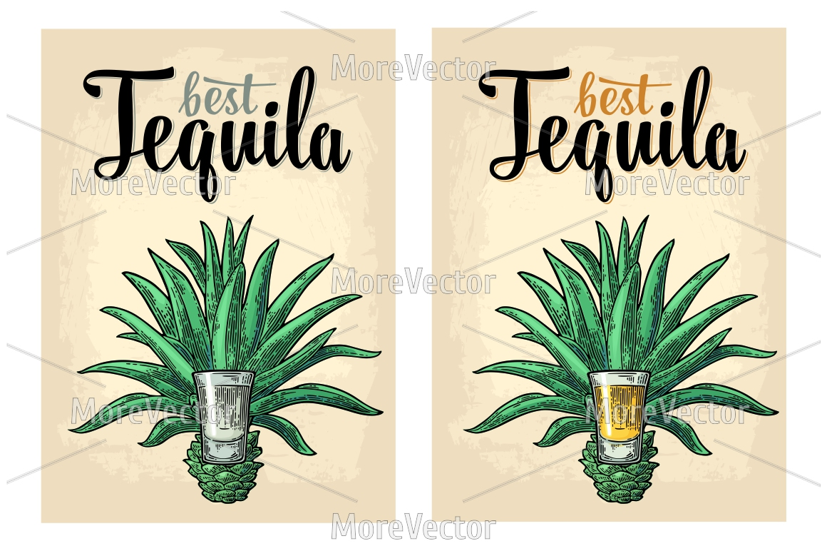 Illustration, pattern and posters Tequila with engraving.  example image 8