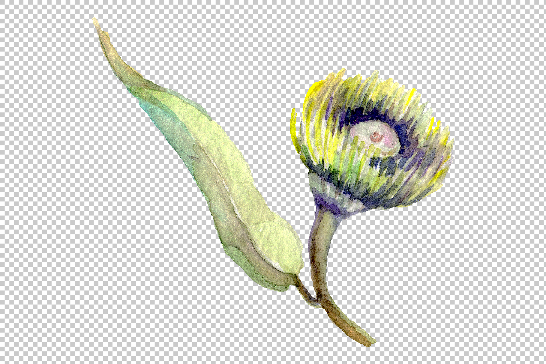 Eucalyptus Watercolor png example image 5