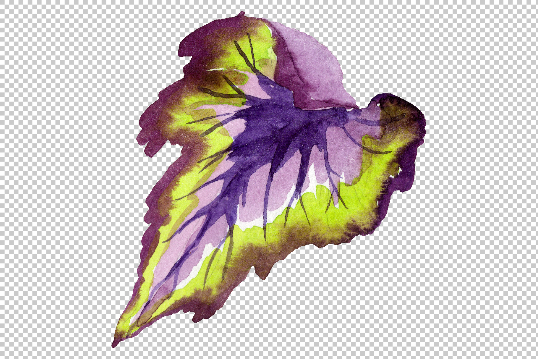 Nautilus-leaf begonia Watercolor png example image 7