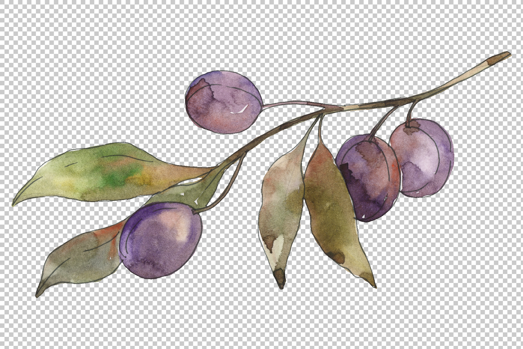 Olives 3 Watercolor png example image 2