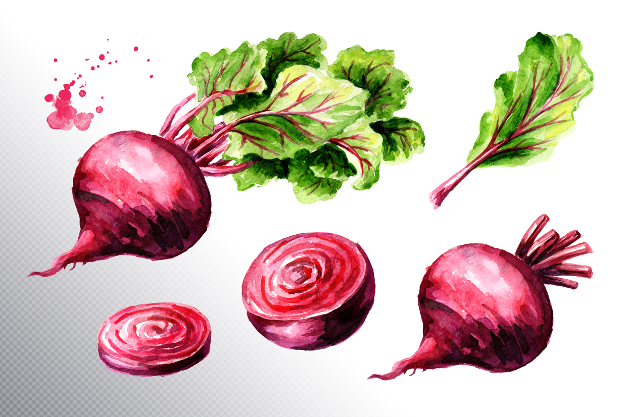 Beet root. Watercolor collection example image 3