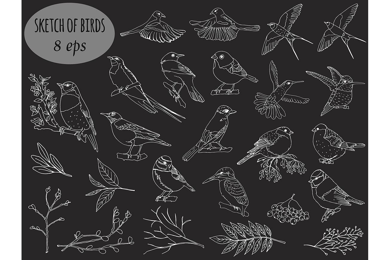 Sketch birds. Vector set. example image 3